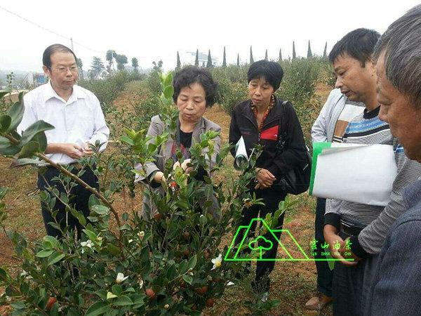 猫先生专家·江西农业大学首席教授郭晓敏电竞指导工作